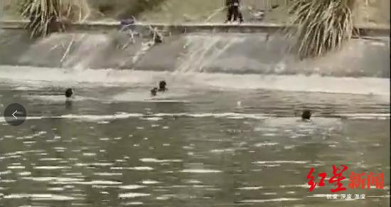 ↑跳河施救落水小孩(视频截图)