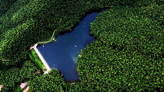 长宁竹海环抱寿山湖。 杨建 摄