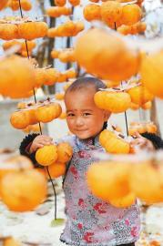 11月5日,九寨沟县南坪镇中田山村的柿子喜获丰收。一名小孩在自家晾晒的柿子丛中玩耍。 周琳摄