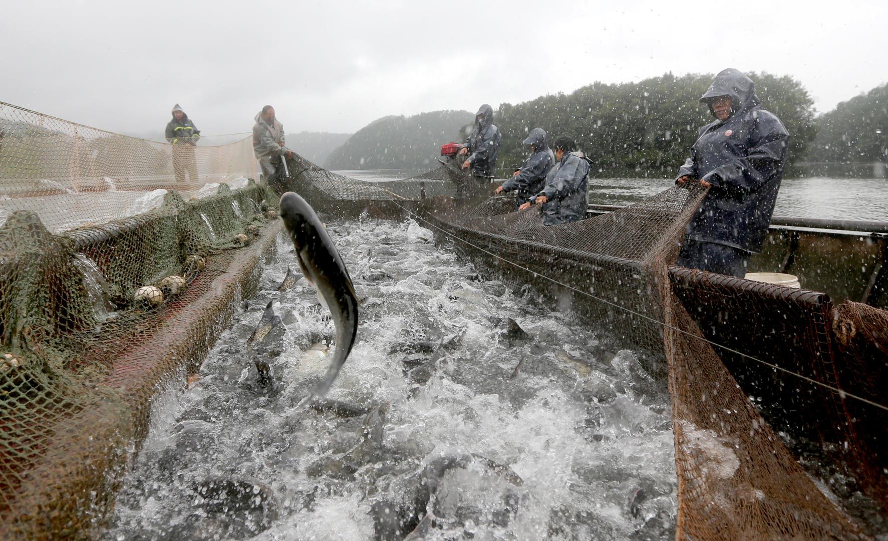"""十年禁渔本月底在川正式拉开 1.6万四川渔民上岸让长江""""养病"""