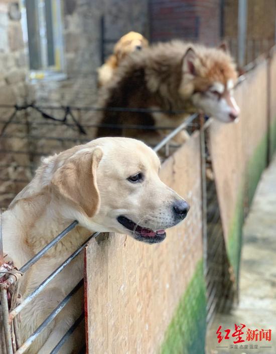 68岁老人卖房收养上千只动物被骂有病:希望推动流浪动物立法