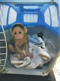 野猴获救现场