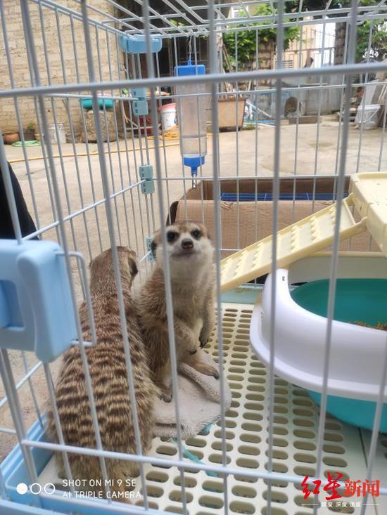 被泸州警方解救的野生动物