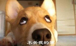 男子罵人惡狗被拘 臺州七人合議庭認定處罰過重判令撤銷