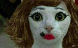 女子因不满新发型回家打伤猫 向理发店索赔猫的治疗费