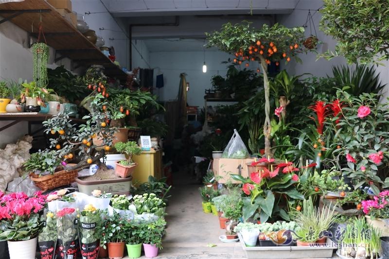 天气转冷 绿色植物走俏乐山冬季花卉市场