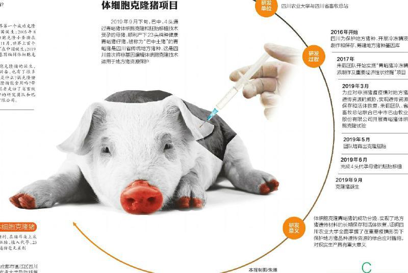 克隆猪的意义和你我想的或许不一样