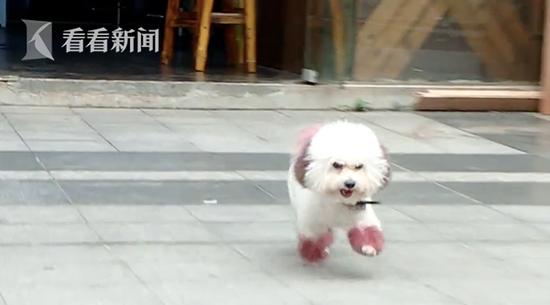 女子捡到狗 向主人索要4500元