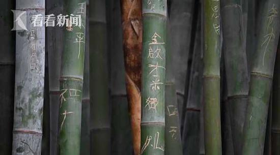 大熊猫基地景观竹遭恶意刻划 游客都看不下去了