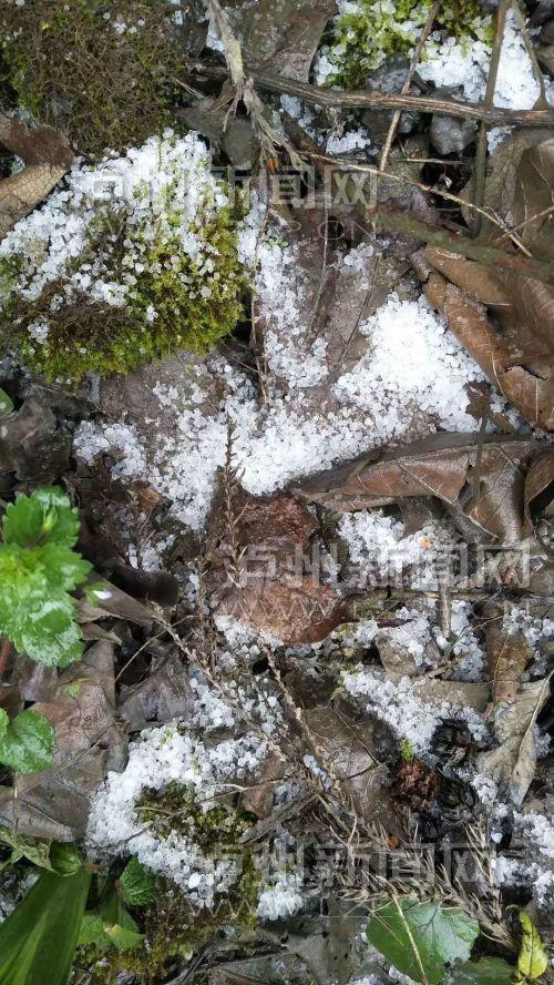 霰的硬度较低,落到地上很快就化了或结成冰