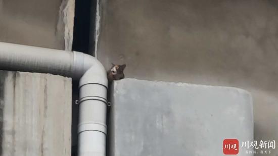 小猫被困高架桥缝隙