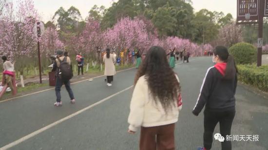 """女子绿心公园野蛮赏花成""""网红"""" 后续来啦……"""