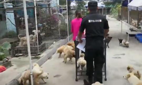 为流浪狗找新家 成都蒲江展开犬只管理专项整治行动
