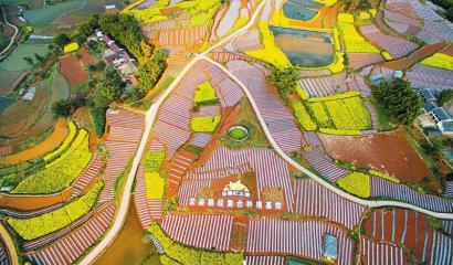 荣县粮经复合种植基地。
