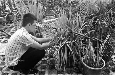 四川大二男生用5个月成功种出杂交水稻 产量近75克