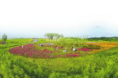 双流区空港花田。