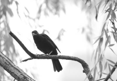 小鸟连续骚扰小狗近一个月 专家:可能狗儿威胁或伤害过鸟儿