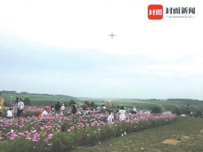 飞机掠过花海上空