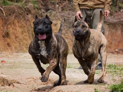 成都开展为期近三个月的犬只管理专项整治行动