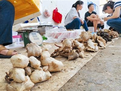西昌长安菜市场售卖的各种菌类