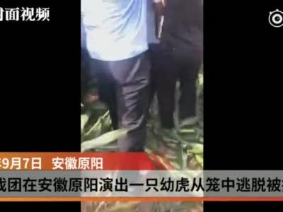 视频丨揭秘:四川马戏团表演老虎多来自安徽