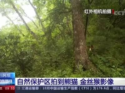 视频丨四川阿坝自然保护区拍到大熊猫 金丝猴影像