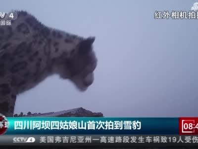 视频丨四川阿坝四姑娘山首次拍到雪豹