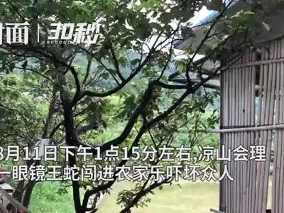 """眼镜王蛇私闯农家乐吓坏众人 四川会理消防紧急""""送客"""""""