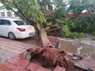 实拍资阳8级狂风:宵夜摊位差点被吹跑 路边大树被连根拔起