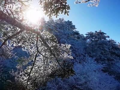 四川峨眉山晴雪飘落 景区宛若冰雪世界