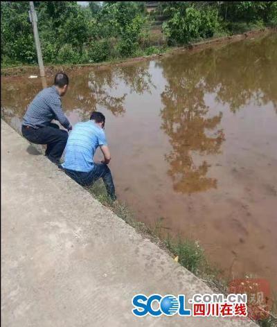 记者采访当日,农技干部和社区干部查看福寿螺处理情况