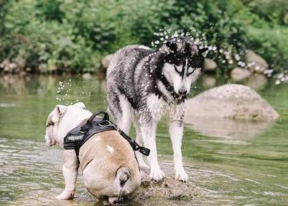 成都有了宠物旅行团 开阔景美相对冷门的地方受青睐