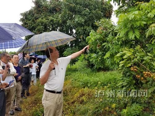 郑少泉研究员(右一)在泸州市农科院桂圆基地参观点评