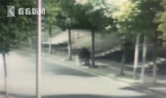 目前,杨某已被当地警方依法刑事拘留。(视频来源:四川新闻 编辑:祝闻豪)