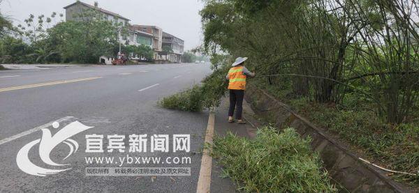 工作人员正在清理倒竹。(宜宾新闻网 曾江 摄)
