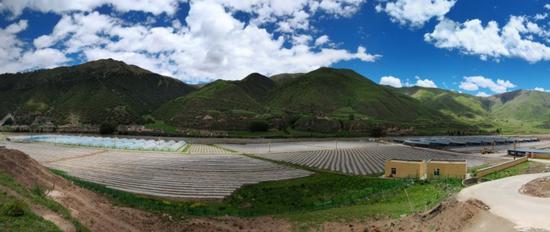 德格县温拖村依托太阳能光伏提灌站,发展了3000余亩的现代农业产业基地。 四川省农田水利局供图