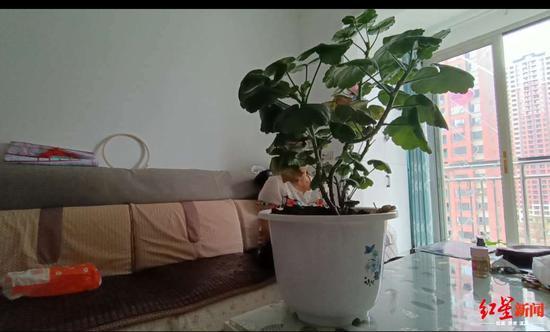 小龚的母亲田女士坐在沙发上