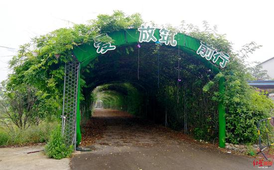 ↑无人管理,度假区内绿色廊道内,满是树叶