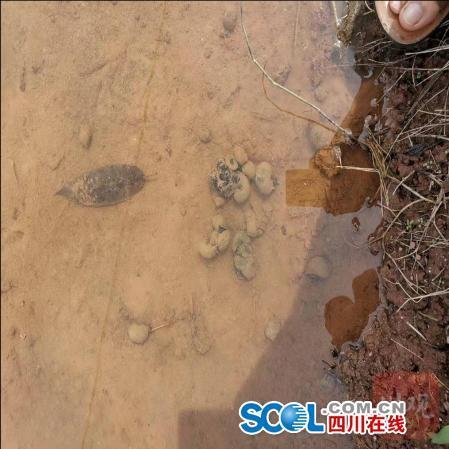 喷洒药物后,当地农田死掉的福寿螺