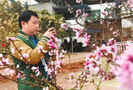 3月5日,毛世杰在成都龙泉驿区一农家乐拍摄桃花。