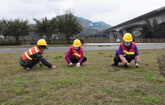 工人正在清除杂草
