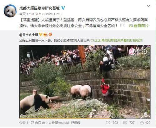 成都大熊猫繁育研究基地微博截图