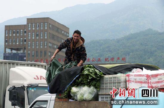 一名货车司机用帆布遮挡车上的蔬菜,准备返程。