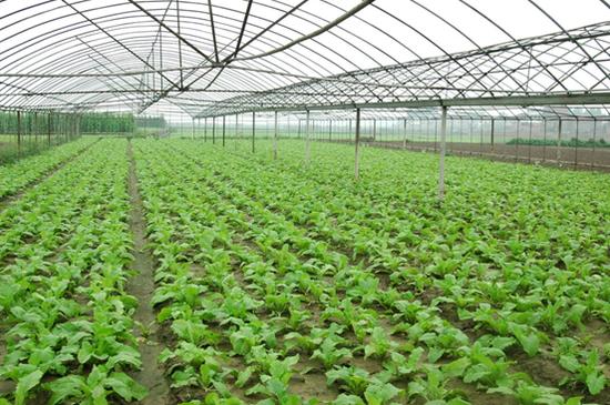 资阳农业农村经济一季度同比增长13.1%