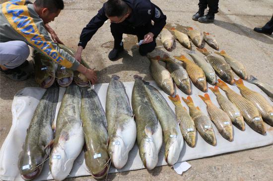 午夜蹲守 广元成功破获一起创纪录的非法捕捞水产品案