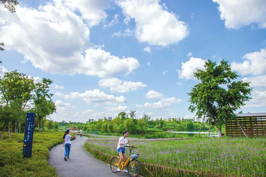 锦江绿道。