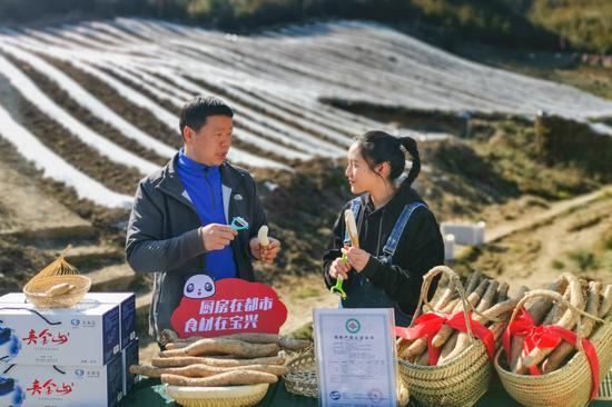 宝兴县委书记变身网络主播 推销熊猫老家有机山药