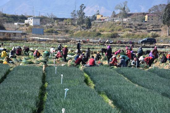 凉山德昌:疫情防控和农产品销售两不误 扎实做好疫情防控期间农产