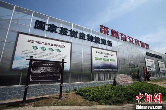 茶树杂交育种园 王磊 摄