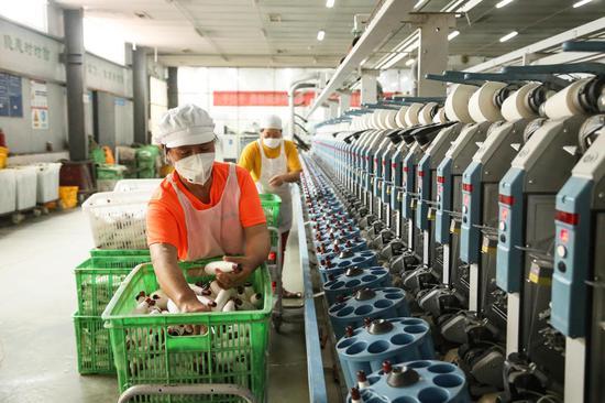 四川雅安芦山纺织园,工作人员进行自络工序的操作